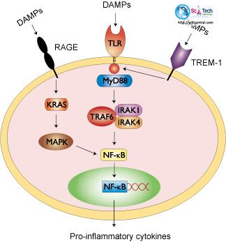 Journal of Cell Signaling & Damage-Associated Molecular Patterns